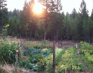 Mike's Green Organic Garden Sunrise
